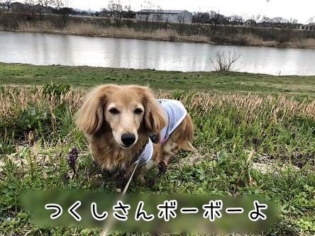 kinako11369.jpeg