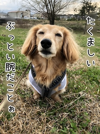kinako11371.jpeg