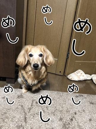 kinako11376.jpeg