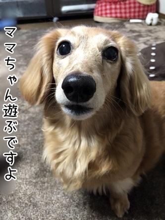 kinako11377.jpeg