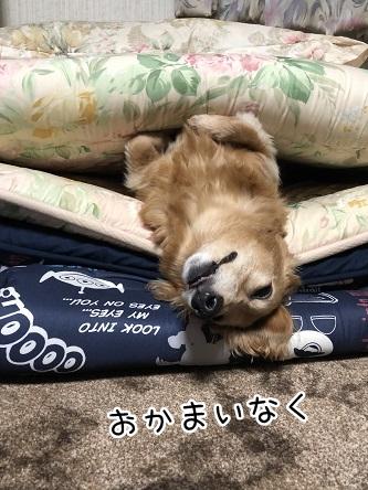 kinako11393.jpeg