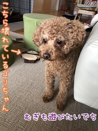 kinako11413.jpeg