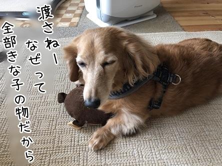 kinako11417.jpeg