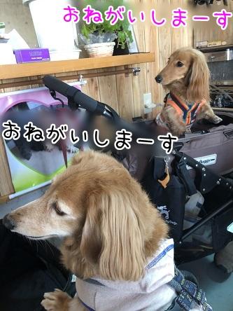 kinako11418.jpeg