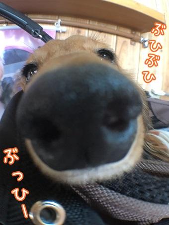 kinako11421.jpeg