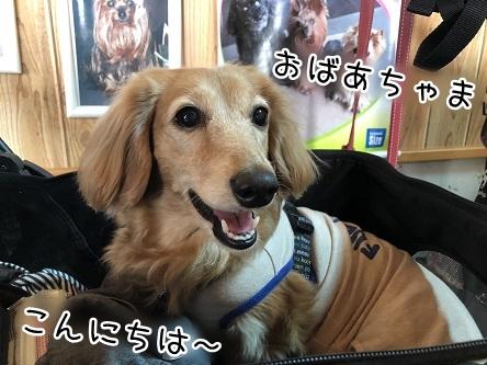 kinako11426.jpeg