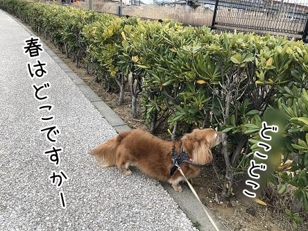 kinako11435.jpeg