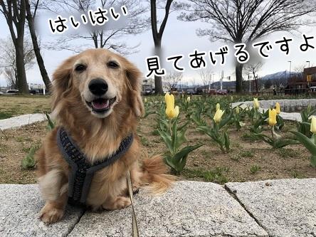 kinako11439.jpeg