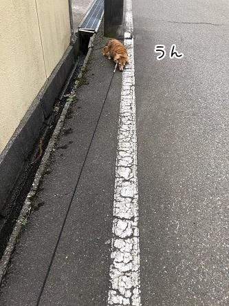 kinako11455.jpeg