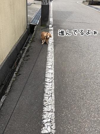kinako11456.jpeg