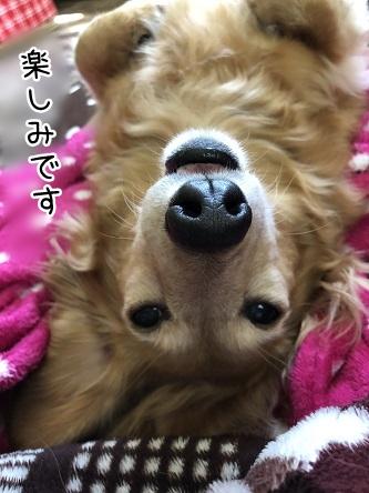 kinako11461.jpeg