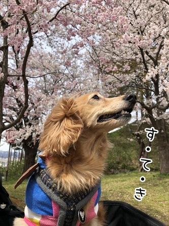 kinako11465.jpeg