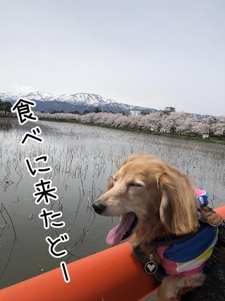 kinako11469.jpeg