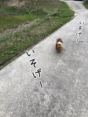 kinako11475.jpeg