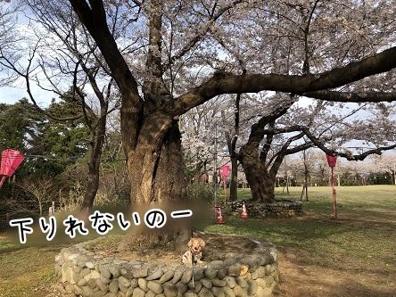 kinako11479.jpeg