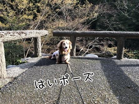 kinako11481.jpeg