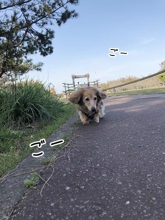 kinako11484.jpeg
