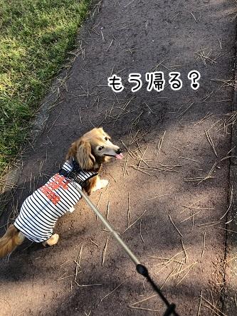 kinako11485.jpeg