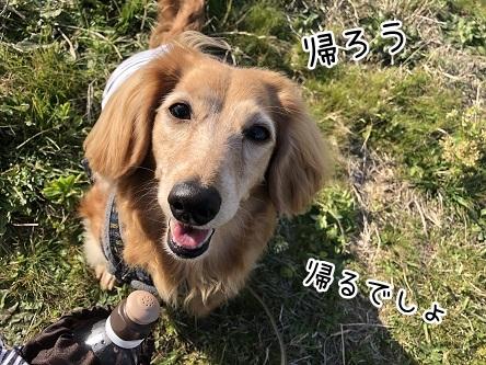 kinako11487.jpeg