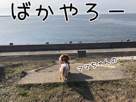 kinako11488.jpeg