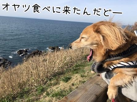 kinako11497.jpeg