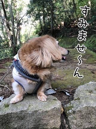 kinako11511.jpeg
