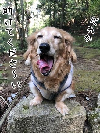 kinako11512.jpeg