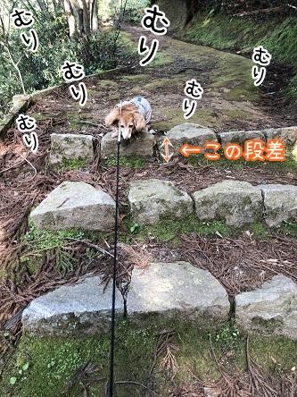 kinako11513.jpeg