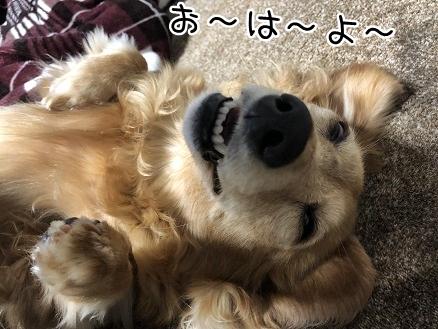 kinako11518.jpeg