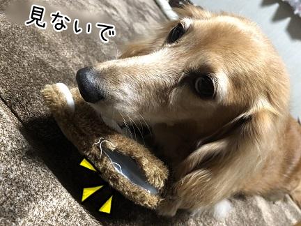 kinako11521.jpeg