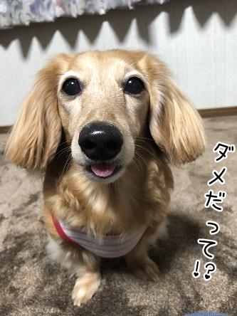 kinako11530.jpeg