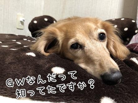 kinako11532.jpeg