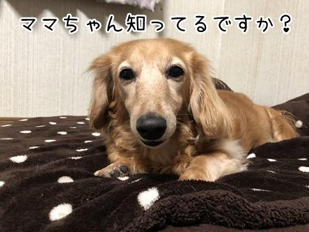 kinako11534.jpeg