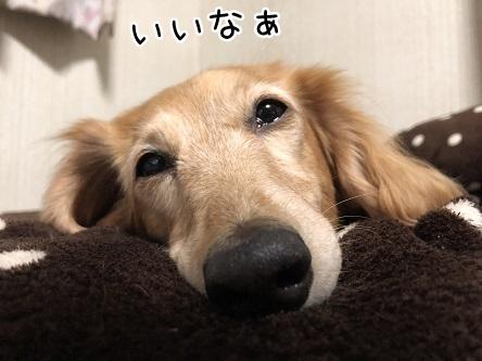 kinako11535.jpeg