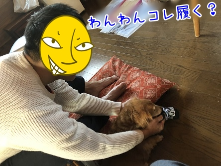 kinako11574.jpeg