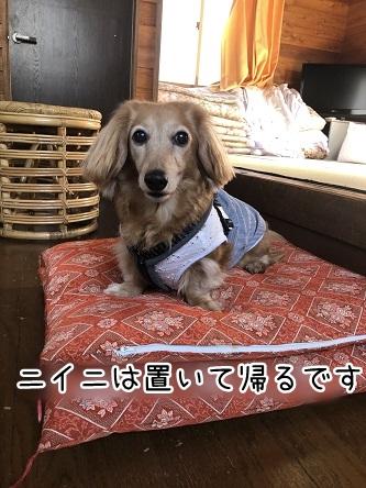 kinako11575.jpeg