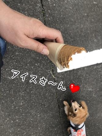 kinako11581.jpeg