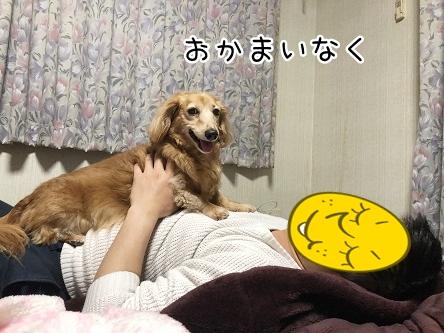 kinako11594.jpeg