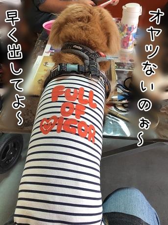 kinako11612.jpeg
