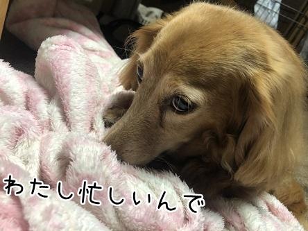 kinako11719.jpeg