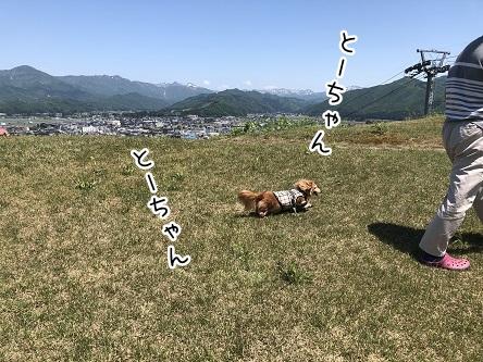 kinako11740.jpeg