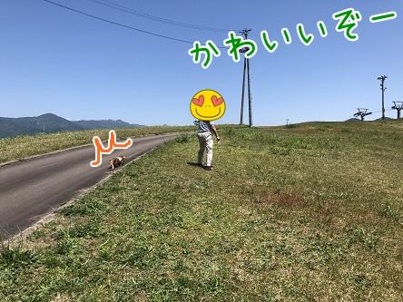 kinako11742.jpeg