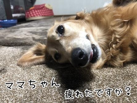 kinako11749.jpeg