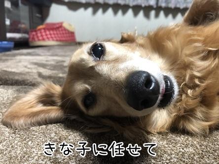 kinako11750.jpeg