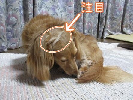 kinako11757.jpg