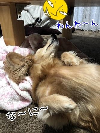 kinako11758.jpeg