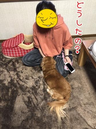 kinako11783.jpeg