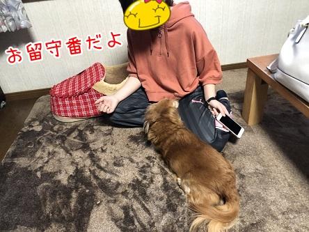kinako11784.jpeg