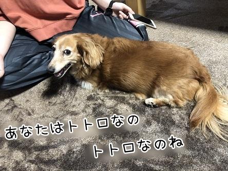 kinako11785.jpeg