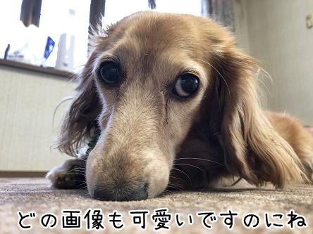 kinako11977.jpeg
